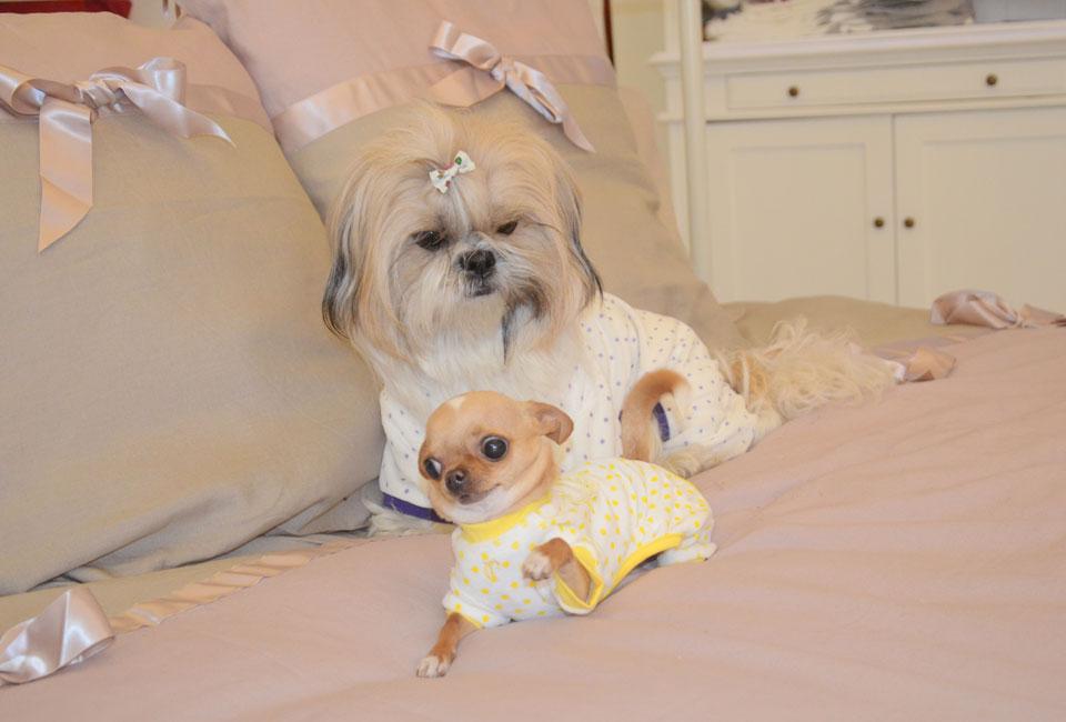 Abbigliamento per cani di piccola taglia chichuahua boutique for Marsupio per cani di piccola taglia