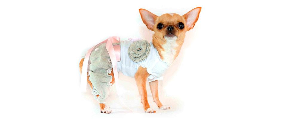 abbigliamento cani piccola taglia modificare una pelliccia
