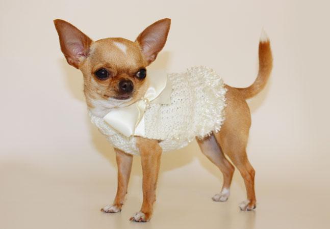 Shopping per cani di piccola taglia chichuahua boutique for Marsupio per cani di piccola taglia