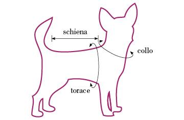 come-prendere-misure-cane