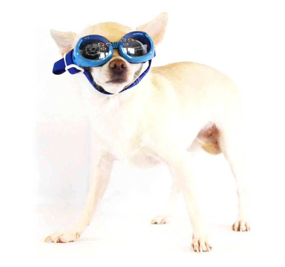 Accessori per cani di piccola taglia chichuahua boutique for Nomi per cagnolini di piccola taglia